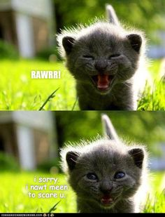 Top 15 Cat Memes This Week - Cheezburger Users Edition - Niedliche kätzchen - Cats Funny Animal Jokes, Funny Cat Memes, Cute Funny Animals, Funny Cats, Cute Cats And Kittens, Baby Cats, Kittens Cutest, Memes Chats, Happy Kitten