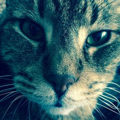 Lilfiv Cat | Pawshake
