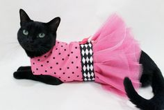 PINK AND BLACK OUTFITS | CoolCats Pink and Black Polka dot Cat Tutu Dress for Birthday Party or ...