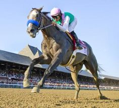 Arrogate wins Travers by 13 1/2 lengths - and a star is born | Daily Racing Form