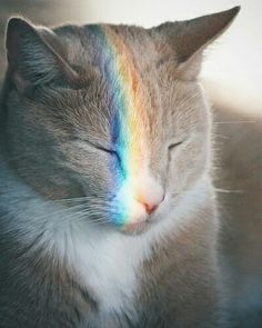 My Little Kitties: Rainbow Cat discovers the Magic of Friendship! Pretty Cats, Beautiful Cats, Animals Beautiful, Cute Animals, Animals Images, I Love Cats, Crazy Cats, Cool Cats, Cute Kittens