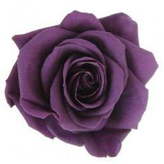 FL090-18 Purple Flowers, Different Colors, 18th, Bloom, Colours, Rose, Plants, Pink, Plant