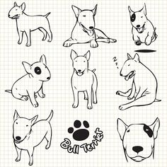 Illustration about Line drawing of Bull terrier dog set on grid paper use for elements design. Illustration of playful, farm, collection - 61975566 Pitbull Terrier, Mini Bull Terriers, Bull Terrier Miniature, Perros Bull Terrier, Chien Bull Terrier, Bull Terrier Funny, English Bull Terriers, Fox Terrier, Bullterrier Tattoo