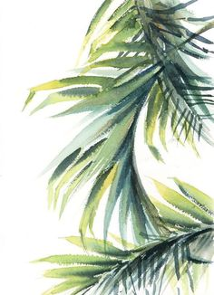 Buy Palm leaves Original watercolor painting, Watercolor by Sophie Rodionov on Artfinder. Discover thousands of other original paintings, prints, sculptures and photography from independent artists. Watercolor Plants, Watercolor Leaves, Watercolor Background, Watercolor Paintings, Original Paintings, Leaves Wallpaper Iphone, Cover Wallpaper, Scenery Paintings, Leaf Drawing