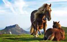 horse art - Interesting Facts About Horses Beautiful Horse Pictures, Most Beautiful Horses, Nature Pictures, Cool Pictures, Canvas Pictures, Horse Wallpaper, Animal Wallpaper, Nature Wallpaper, Lion Wallpaper