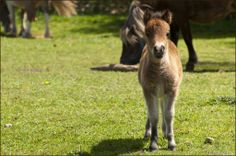 Spring is a great time of year to check out all of the baby animals at Oaklawn Farm Zoo in Aylesford, Nova Scotia. #Cute #Foal #Miniaturepony