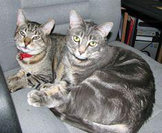Kasha and Toby
