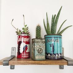 cute plant grouping in vintage tins by a carpendaughter_vintage on IG