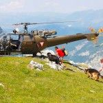The Dogs of Salzburg Mountain Rescue