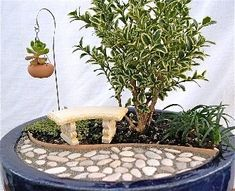 Miniature Fairy Gardens Plants | Miniature Garden Kit for Fairy, Indoors, Outdoors Plants, Trees and ... by montse.esquivel.779