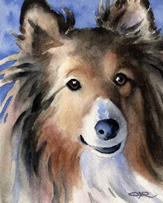 Shetland Sheepdog Art Print Signed by Artist DJ Rogers, Sheltie Art Print Dog Dna Test, Shetland Sheepdog Puppies, Herding Dogs, Pastel, Sheltie, Dog Art, I Love Dogs, Watercolor Paintings, Watercolor Animals
