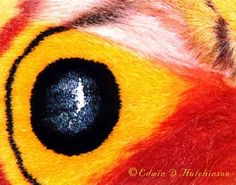 An eye or a butterfly wing?