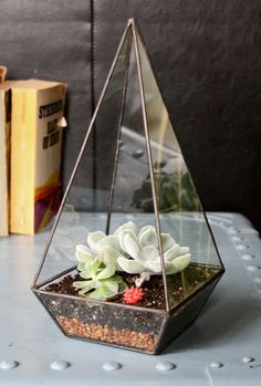 A beautiful terrarium makes a great gift for a green-thumbed friend