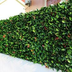 e-joy 24 Piece Artificial Topiary Hedge Plant Privacy Fence Screen Greenery Panels Suitable for Both Artificial Green Wall, Artificial Hedges, Artificial Topiary, Artificial Plants, Trellis Fence, Garden Fence Panels, Garden Fencing, Gravel Garden, Bamboo Fence