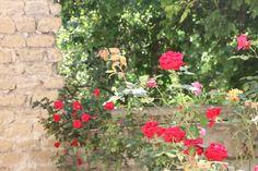 Roses, Avignon, Provence, France.