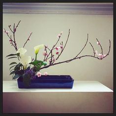 【virtuous_smile】さんのInstagramをピンしています。 《Winter prettiness in this ikebana arrangement at the Ikebana International exhibition last weekend. #melbourne #melbournetownhall #ikebanainternational #ikebana #floralarrangement #amazing #lovely #japan #japanese #callalillies #cherryblossoms #pink #white #lillies #floral #flower #flowers #nature #garden #petals #stems #pretty #beautiful #vase #leaves #purple》