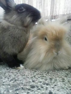 Reminds me of my two babies, Bunbun and Sweetpea.