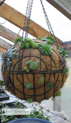 Succulent Sphere DIY Is Your Next Project