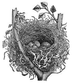 black and white vintage spring graphics fairy | Stock Images - Vintage Egg, Nest & Bird - The Graphics Fairy