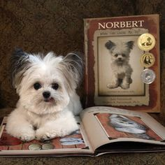 Norbert's first book won several awards and plenty of fans. (Image courtesy Norbert's Facebook page)
