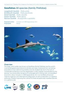 CMS CoP11 Fact Sheets #ProjectAWARE - Sawfishes