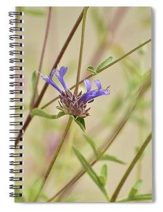 """This 6"""" x 8"""" spiral notebook features the artwork """"Salvia Clevelandii IIi"""" by Linda Brody on the cover and includes 120 lined pages for your notes and greatest thoughts."""