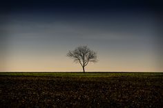 The Tree - Wallpaper by VIENNA IMAGES  #images #Tree #vienna Central San Francisco Wallpaper, Youtube Images, Tree Wallpaper, Phnom Penh, Fuji, Vienna, Lightroom, Solar, Fine Art