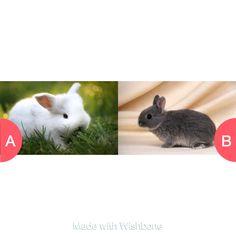 WYR have white bunny or dark  Click here to vote @ http://wishbone.io/wyr-have-white-bunny-or-dark-35317602.html?utm_source=app&utm_campign=share&utm_medium=referral