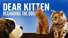 An Older Cat Explains the Concept of Dogs to a Young Kitten in New Episodes of 'Dear Kitten'