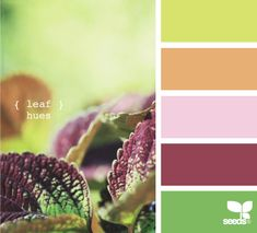 Ooo, I think I need to make some cards for spring with these colors!
