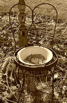 Cool way to make birdfeeder, old chair and bowl, of course my chickens would be the first to find it.