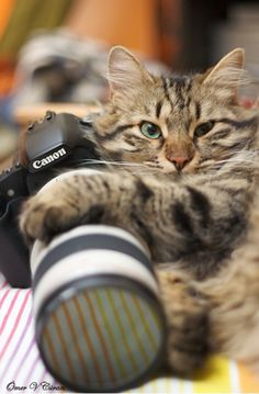 100 great cat photo ops!  Where would the world be without these wonderful animals?