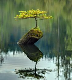 I Stand alone in my greeness surviving the storms that have brutally withstood.
