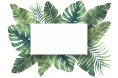 Lovely natural frame with tropical leaves Free Psd Tropical Background, Flower Background Wallpaper, Flower Backgrounds, Wallpaper Backgrounds, Leaves Wallpaper, Theme Background, Leaf Background, Images Instagram, Instagram Frame