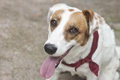 No Brasil existem 20 milhões de cachorros abandonados. Infelizmente a grande maioria das pessoas ainda prefere comprar um cachorro de raça, enquanto há milhares de cães em abrigos esperando um lar. Tudo que eles querem é o seu amor.