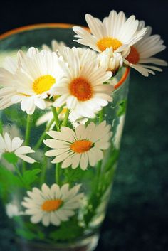 Daisies in a vintage daisy glass.