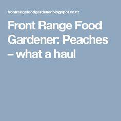 Front Range Food Gardener: Peaches – what a haul