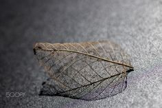 Leaf - the little things