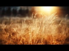 Listen to a 2h long playlist with relaxdaily music. Beautiful, light instrumental music with an easy, smooth and inspirational attitude. Download at https://...