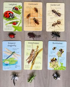 Montessori 3-6 Culture: Zoology Insects