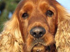 Entérate de cómo prevenir y tratar el moquillo canino con remedios naturales http://www.mascotadomestica.com/articulos-sobre-perros/como-prevenir-y-tratar-el-moquillo-canino-con-remedios-naturales.html