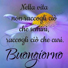 Buongiorno immagine 1 Italian Proverbs, Italian Memes, Fiat Panda, Oita, Italian Language, Good Morning Good Night, Decir No, Love You, Dolce
