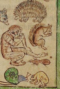 Monkey and pals, Adam Naming the Animals, from the Northumberland Bestiary, English, about 1250-60. J. Paul Getty Museum