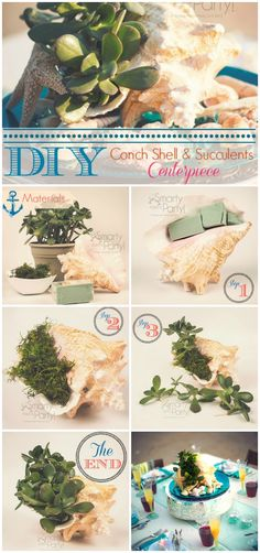 #DIY conch shell and #succulents #centerpiece. Create a beautiful #seashell centerpiece for a #coastal look.