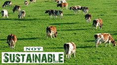 Raising animals requires vast quantities of water and wide tracts of pastureland. However, this isn't such a sustainable option and leads to land degradation and soil erosion.