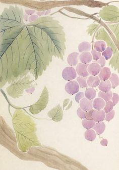 ブドウ Vitis vinifera (grape, vine), 本草図譜  岩崎 灌園, Honzo-Zufu, KanEn Iwasaki (1830)