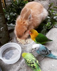 Good friends share their food Cute Birds, Pretty Birds, Beautiful Birds, Animals Beautiful, Animals And Pets, Funny Animals, Cute Animals, Baby Wombat, Budgies