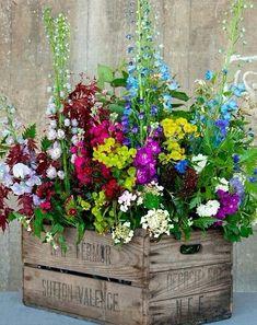 제주도의 꽃들... 제주도 전지역 꽃배달