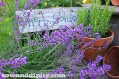 Edible Flowers Garden Bed Design