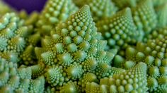 Fractals in nature - HDR by Rich pick, via Flickr